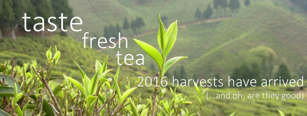 freshteasproutdarjeeling