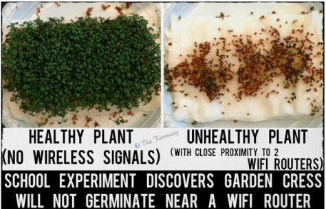 Garden Cress not germinate - wifi