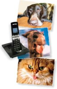 electrosmog-makes-animals-sick