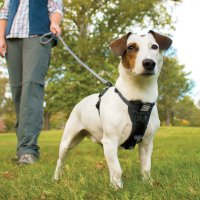 The Best Leashes And Harnesses For Dogs That Pull - The ...