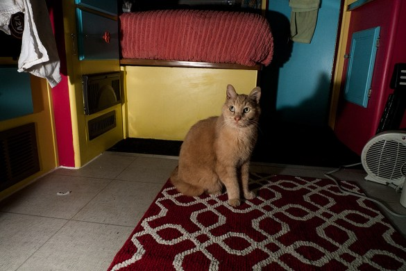 Road Kitties