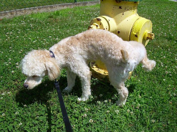 6th-dog-urinating