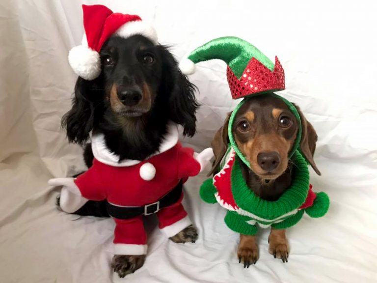 Santa Paws Is Coming To Town Britains Most Festive Pets