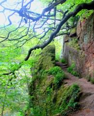 Lacys Cave Path