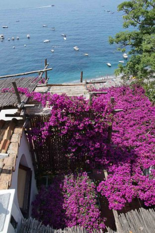 Bougainvillea Amalfi Coast