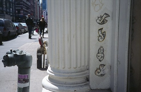 birds of paradise street art