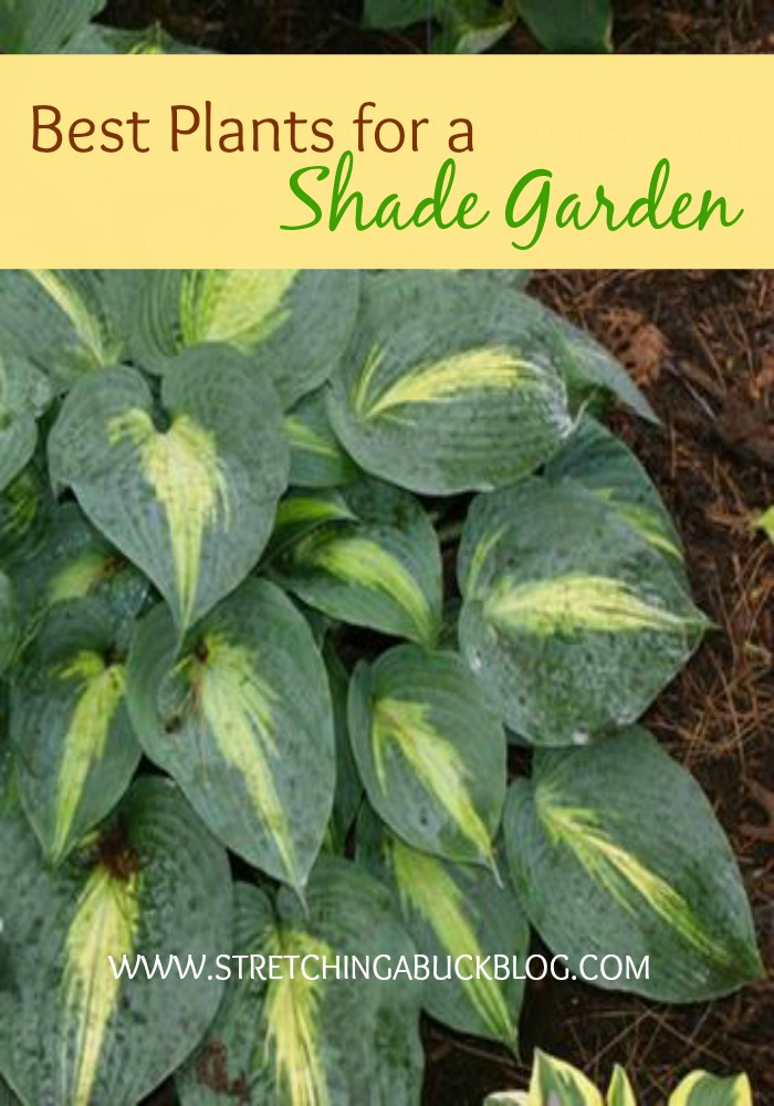 Great Plants For A Shade Garden Stretching A Buck