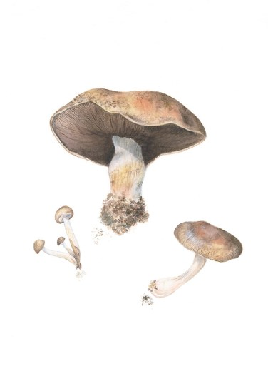 Mushrooms by Anna Rosenthal