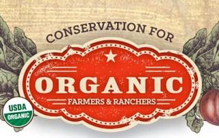 organic cool