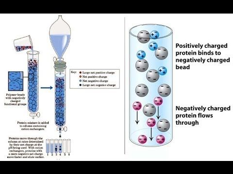 Ion Exchange chromatography Principle, Method  Applications - cation exchange chromatography