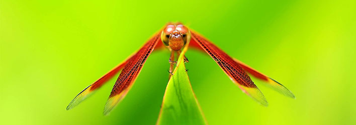 dragonflies-wallpapers-featured