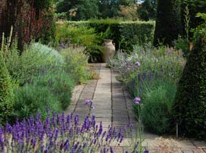 Plants for Successful garden design