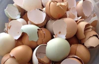 لهذه الأسباب ينصح الخبراء بتناول البيض النيء