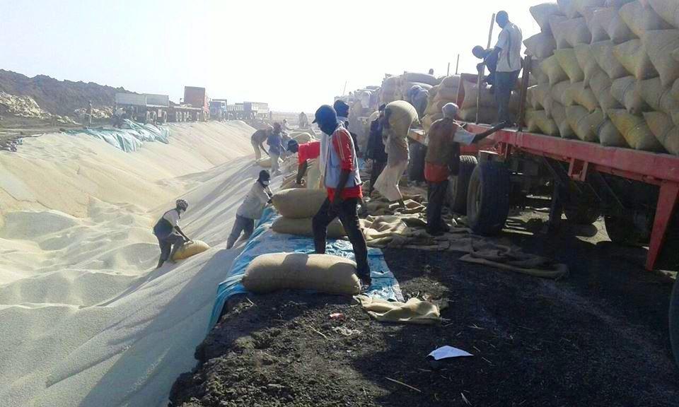 بالصور : السودان يطمر 5 مليون طن ذرة داخل الأرض
