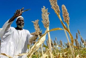 القضارف تتسلَّم 40 مليار جنيه لتعويض المزراعين