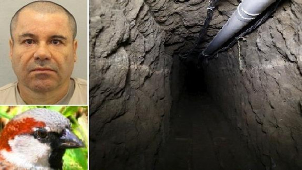 عصفور ساعد بارون المخدرات ليفر من أصعب سجون المكسيك