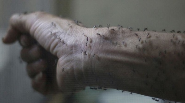 """الصحة العالمية: تزايد أدلة تسبب """"زيكا"""" بتشوهات المواليد"""