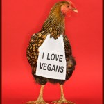 Chicken wearing funny vegan sign.
