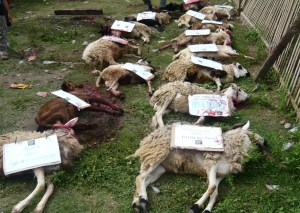 15 kambing qurban 300x213 The First Ten Days of Zulhijjah
