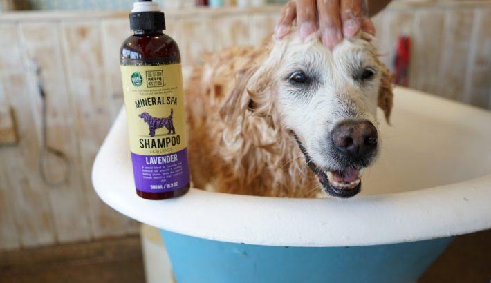 Refreshing Bath with RELIQ Mineral Spa Dog Shampoo