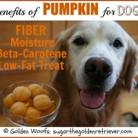 Frosty Pumpkin: Benefits of Pumpkin for Dogs