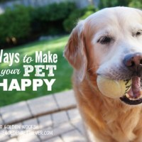 Healthy Pets, Happy Pets #GetHealthyHappy
