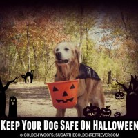Keep Your Dog Safe On Halloween