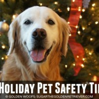 5 Holiday Pet Safety Tips + Petco Infographic: Feed This Not That