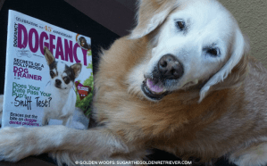Golden Woofs Recipe Featured in Dog Fancy Magazine