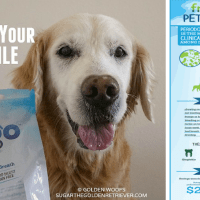 Pet Dental Health Facts from PetSafe