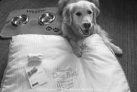 Westin Dog #WestinWeekend - Golden Woofs