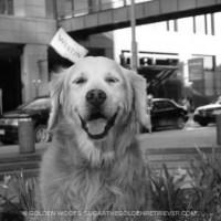 Westin Dog #WestinWeekend