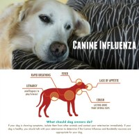 Do you know how to take your dog's temperature?