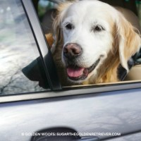 JOIN TrueCar #DogsInCars Benefiting Best Friends Animal Society
