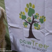pawTree petPro Home Based Business for Dog Lovers