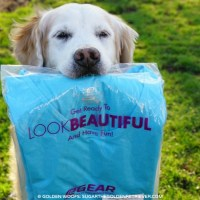 Look Good Walking Your Dog: #RoadRunnerSports R-Gear