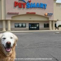Celebrate National Ice Cream Day at PetSmart's PetsHotel