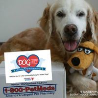 Join the 1-800-PetMeds DOGust Birthday Sweepstakes