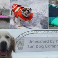 Fun, Love, & Trust: 2015 Unleashed by Petco Surf Dog Competition