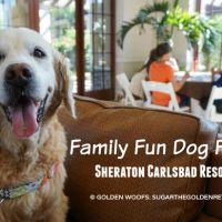 Family Fun Dog Friendly Sheraton Carlsbad