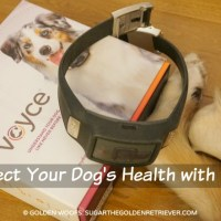 Monitor Your Dog's Health & Wellness with Voyce