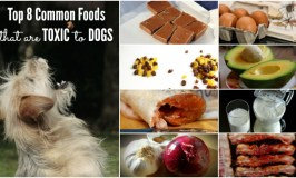 Top 8 Common Foods That Are Toxic to Dogs