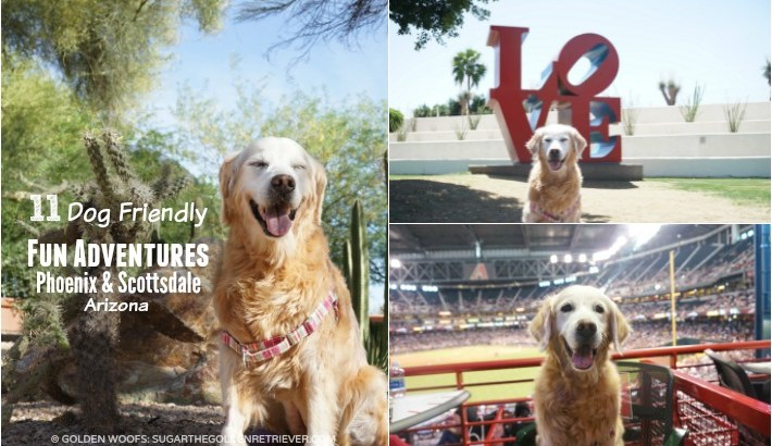 11 Dog Friendly Fun Adventures #BeSleepypodSafe