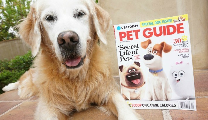 Golden Woofs Featured in USA Today Pet Guide
