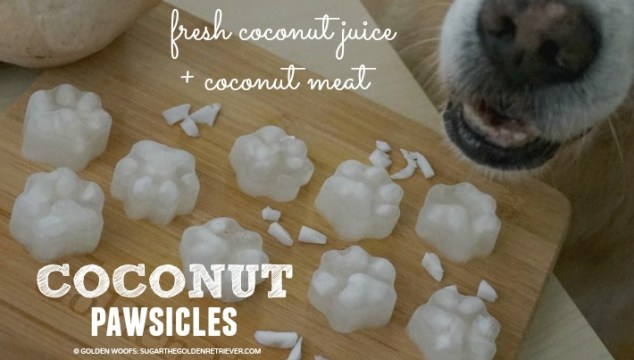 Refreshing Fresh Coconut Popsicles {PAWsicles}