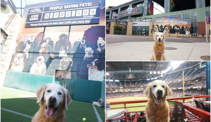 Pawsitively Dog Friendly Chase Field #PetSmartPatio