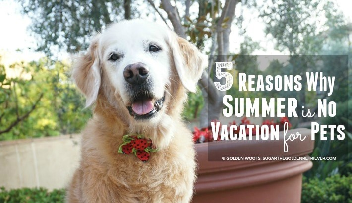 5 Reasons Why Summer is No Vacation for Pets