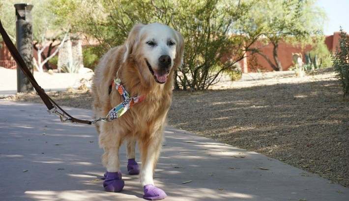 Protect Your Dog's Paws from Hot Pavements