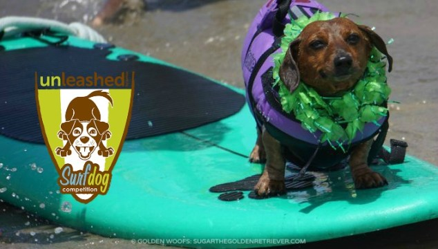 2016 Unleashed by Petco Surf Dog Imperial Beach