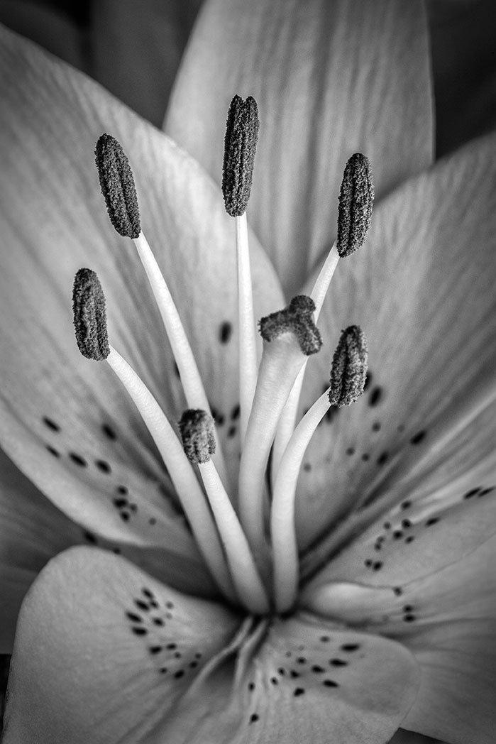 daffodil-9673